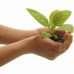Novel Writing: Planting, Foreshadowing or Withholding Info