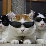 The Cat Mafia Says: Put a Reader on Your Book Cover
