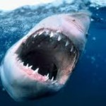 Sharks Are Circling! Save My Baby!