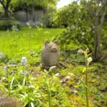 My Backside in the Garden