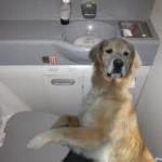 Flushophobia: Teeny Airpane Bathrooms