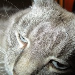 """Cat Saves Boy and Cranky Sez """"Meh."""""""