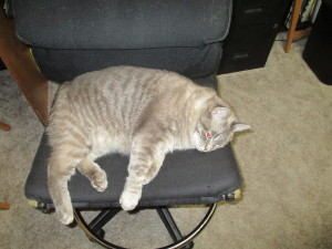 Cranky Cat demonstrates Butt in Chair