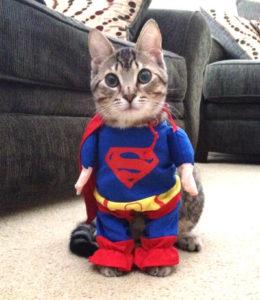 Super_cat_400