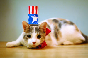 Be kind to pets this 4th of July!