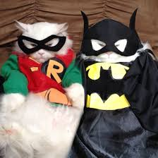 Batman Robin cats