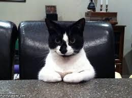 Cat Bored Meeting