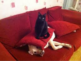 cat-on-dog
